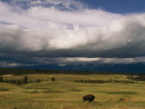 Clouds Hover over a Free-Roaming Bison on the National Bison Range