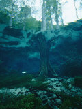 View of a Tree Trunk Underwater in Blue Springs  Florida