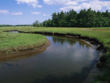 The Little River Winds Through Coastal Salt Marshes and Wetlands