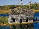 Marsh Reclaims an Abandoned Homestead