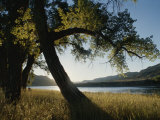 Twilight View of Missouri River and Cottonwood Tree