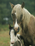 Portrait of a Wild Pony and her Foal