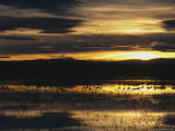 Silhouetted Sandhill Cranes in Marsh at Sunset