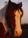 Chincoteague Pony in the Light of a Setting Sun