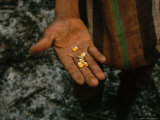 Farmer Holds Kernels of Corn