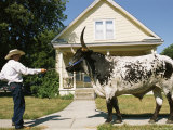 A Cowboy Uses a Harness to Lead His Bull Along a Suburban Sidewalk