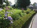 Public Garden with Blooming Hydrangeas
