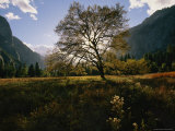 View of a Meadow in Yosemite National Park