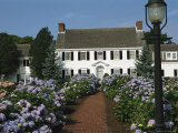 Blooming Hydrangeas Lining a Homes Walkway