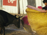A Bullfighter Swings His Cape as a Black Bull Approaches