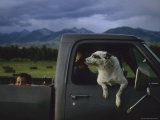 A Young Boy and His Dog Ride in His Grandfathers Truck
