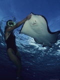 A Diver Having a Close Encounter with a Southern Stingray