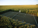 A Tennis Court Carved from a Cornfield