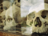 Skulls on Display at the Tuol Sleng Genocide Museum