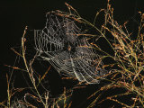 An Orb Weaving Spider Sitting in the Center of Its Web