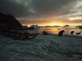 Twilight View of Sled Dogs and Sled on Shore with Boat in Distance