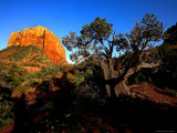 Courthouse Butte and a Cypress Tree
