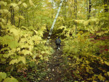 A Young Hiker Walks Through a Forest of Trees in Gold Autumnal Colors