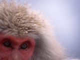 Close-up of Eyes and Fur of Japanese Macaque (Snow Monkey)