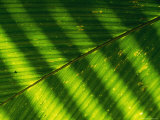 Detail of a Large Leaf with Shadows and Sunlight Playing against It