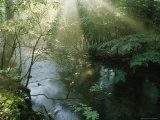 Sunlight Highlights a Small Creek in the Great Smokies  Tennessee
