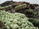 Mounds of Cabbages in Baskets Await Transport via Flat Bed Tricycles  Sichuan Province  China