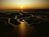 Tidal Creeks Catch the Setting Sun  Cape Romain  South Carolina