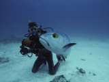 A Diver Has a Close Encounter with a Fish