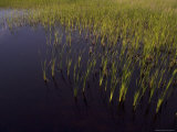 Grasses Grow in a Swampy Area of the Park  Prince Edward Island National Park  Canada