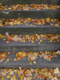 Autumn Leaves Lie on House Steps Giving Color to the Drab Cement  Washington  District of Columbia