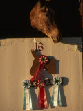 Mule in Stall with Ribbons Won During Mule Days in Bishop  California