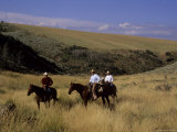 A Cowboy and Friends Herd Cattle on His Ranch  Steamboat Springs  Colorado