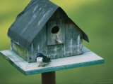 A Tree Swallow Sits on the Front Porch of Its House