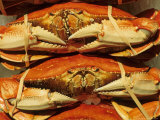 Dungeness Crab at Pike Place Public Market  Seattle  Washington State  USA