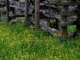 Rail Fence and Buttercups  Pioneer Homestead  Great Smoky Mountains National Park  Tennessee  USA