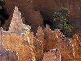 Queen Victoria Hoodoo at the Queens Garden  Bryce Canyon National Park  Utah  USA