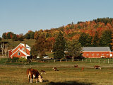 Autumn View of Farm  Vermont  USA