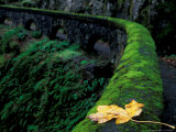 Fence Along Path to Shepherd's Dell Falls  Columbia River Gorge National Scenic Area  Oregon  USA