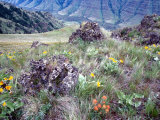 Arrowleaf Balsamroot and Indian Paintbrush  Imnaha River Canyon Rim  Oregon  USA