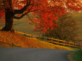 Country Lane  Faquier County  Virginia  USA