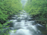 Little River  Tremont Area  Great Smoky Mountains National Park  Tennessee  USA