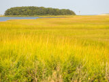 Canoeing the Sloughs and Waterways of Long Island Sound  The Hamptons  New York  USA