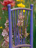 Mixed Flowers and Old Chair  Seattle  Washington  USA