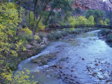 Virgin River and Couple on the Footbridge  Zion National Park  Utah  USA