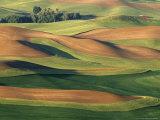 Patterns of Wheat and Fallow from Steptoe Butte  Whitman County  Washington  USA