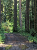 Dirt road into Opal Creek Wilderness area  central Oregon Cascades