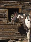 Ranch Living at The Ponderosa Ranch  Seneca  Oregon  USA