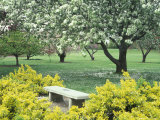 Flowering Trees with Memorial Bench  Yakima Area Arboretum  Washington  USA