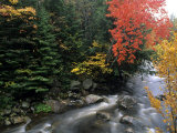 Moving Stream And Fall Colors  Groton  Vermont  USA