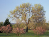 Flowering Trees in the Yakima Area Arboretum  Washington  USA